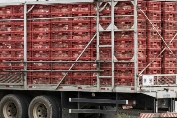 República dominicana habilita BRF de Concórdia para exportação de aves