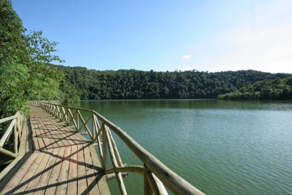 Espécies nativas foram plantadas no Parque Estadual Fritz Plaumann